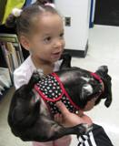 Photo of Ava the dog at the library held by a little girl