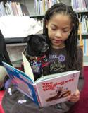 Photo of Ava the dog at the library reading a book