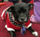 Photo of Ava the dog dressed in holiday attire