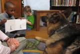 Photo of Dakota the dog listening to a story at the library