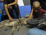 Photo of Ella the dog relaxing while a boy reads to her