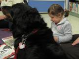 Photo of Happy the dog listening patiently to a story at the library