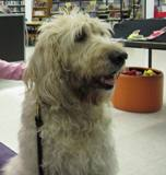 Photo of Harpo the dog up close at the library