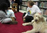 Photo of Harpo the dog reading at the library