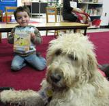 Photo of Harpo the dog at the library