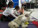 Photo of Harpo the dog getting a massage at the library