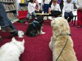 Photo of Harpo the dog attentively listening with the other doggies