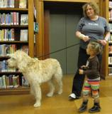 Photo of Harpo the dog going for a walk at the library