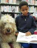Photo of Harpo the dog with a boy reading at the library