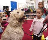 Photo of Harpo the dog in the library preparing to walk