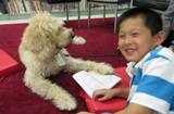 Photo of Harpo the dog and boy reading