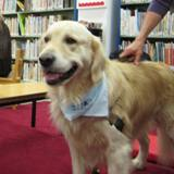 Photo of Leo the dog at the library