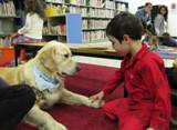 Photo of Leo the dog and a boy holding paws