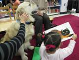 Photo of Leo the dog at the library reading a cat story with a little girl