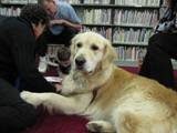 Leo relaxing in the library