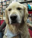 Photo of Leo the dog close up at the library