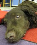 Photo of Max the dog resting at the library