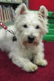 Photo of Nessie the dog at the library