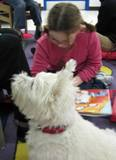 Nessie the dog at the library