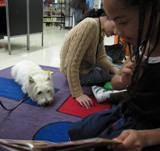 Photo of Nessie the dog and a girl reading