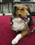 Photo of Nola the dog at the library