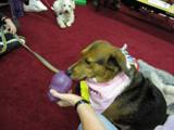 Photo of Nola the dog with a toy at the library
