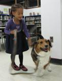 Photo of Nola the dog going for a walk in the library