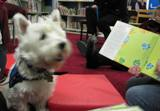 Photo of Pablo the dog listening to a story
