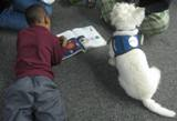 Photo of Pablo the dog listening to a story at the library