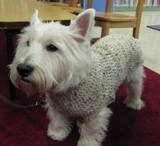 Photo of Pablo the dog wearing his sweater at the library