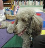 Photo of Ella the dog content in the library