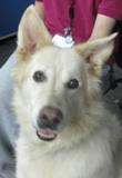 Photo of Snowball the dog