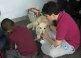 Photo of Snowball the dog learning at the library