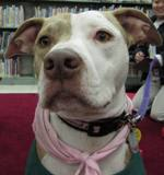 Photo of Susie the dog up close at the library