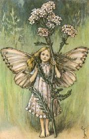 Image of the Yarrow Fairy from the book Flower Fairies of the Summer with link to its catalog record