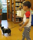 Photo of Ava the dog going for a walk at the library