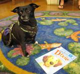 Photo of Ava the dog waiting for someone to read to her at the library