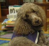 Photo of Ella the dog at the library