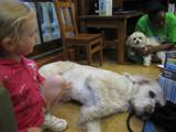 Photo of Harpo the Dog relaxing at the library post-story