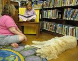 Photo of Harpo the dog listening to a girl read at the library