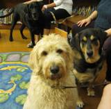 Photo of Kirby the dog and his doggie mates Harpo & Freddie
