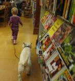 Photo of Pablo the dog going for a stroll at the library