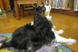 Photo of Quincy the dog listening at the library