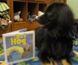 Photo of Teddy the dog and his favorite book of the night