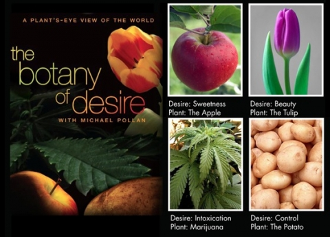 an analysis of the chapter desire control plant the potato in michael pollans book the botany of des