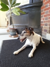 Photo of Hatfield the Dog on the Porch