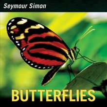 Butterflies by Seymour Simon