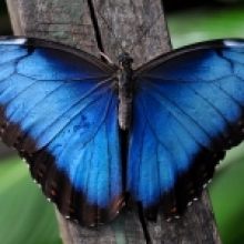 butterfly picture