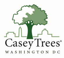 caseytrees