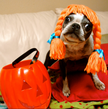 dog trick or treat
